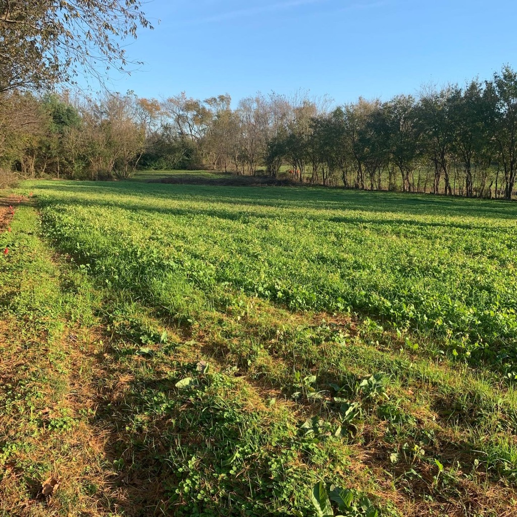 "say ""Hello"" to the cover crops"